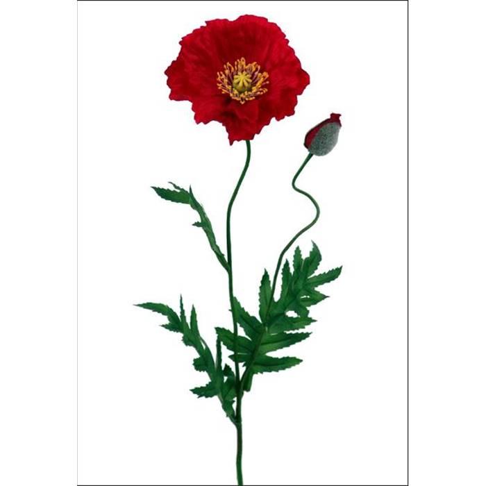 Декоративный цветок мака